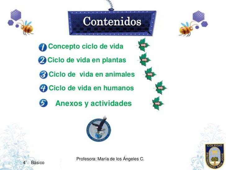 Los ciclos de vida. Slide 2