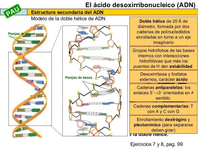 Los ácidos Nucleicos 2013
