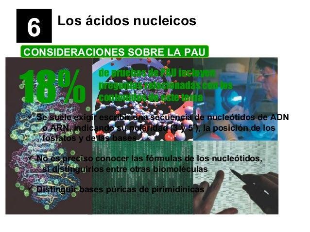 6 Los ácidos nucleicos CONSIDERACIONES SOBRE LA PAU 18% de pruebas de PAU incluyen preguntas relacionadas con los contenid...