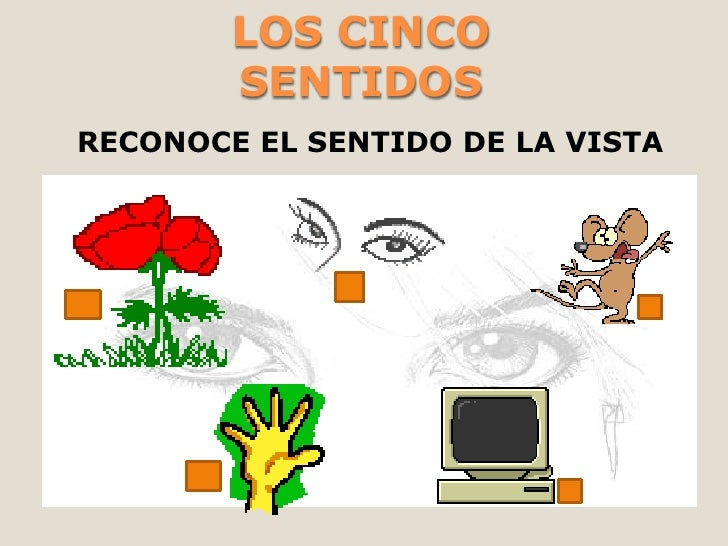 LOS CINCO        SENTIDOSRECONOCE EL SENTIDO DE LA VISTA