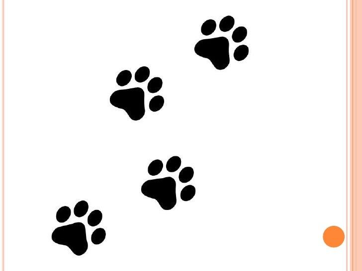 Los cuidados básicos de tu perro