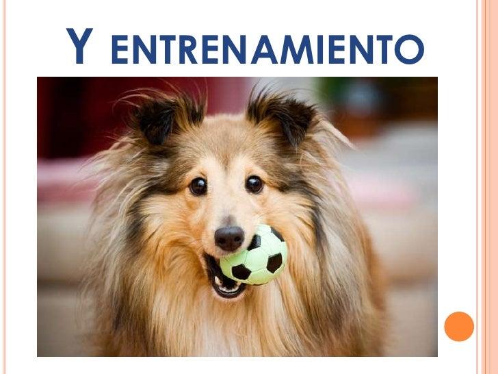 ES IMPORTANTE ATENDERLO YEDUCARLO CORRECTAMENTEDURANTE LOS PRIMEROSMESES DE ESTANCIA EN CASA