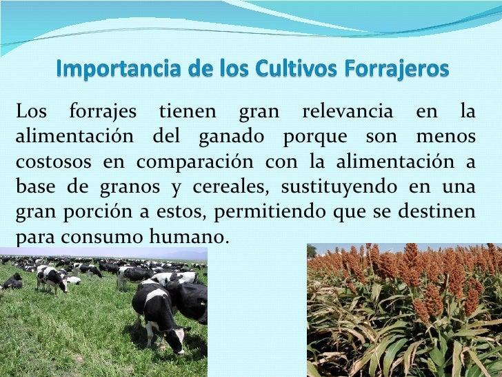 Los cultivos forrajeros ii for Que son cultivos asociados