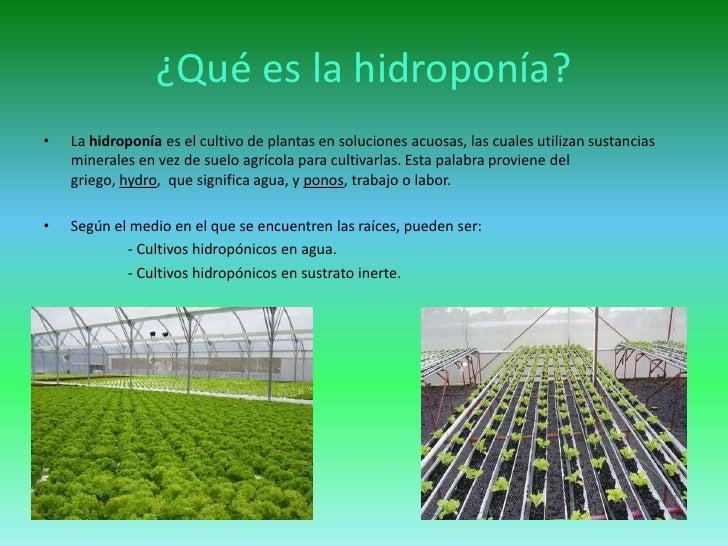 los cultivos hidropnicos los