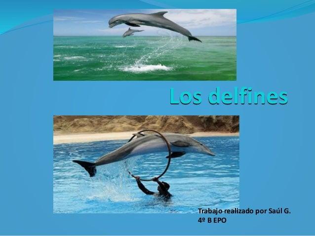 Los delfines Trabajo realizado por Saúl G. 4º B EPO