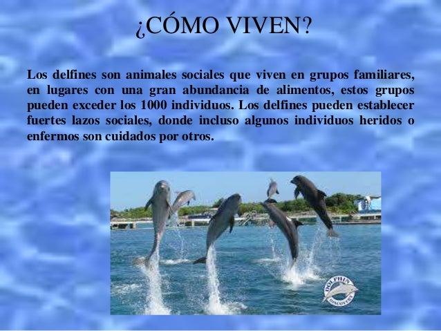 Los delfines for De donde sacan el marmol