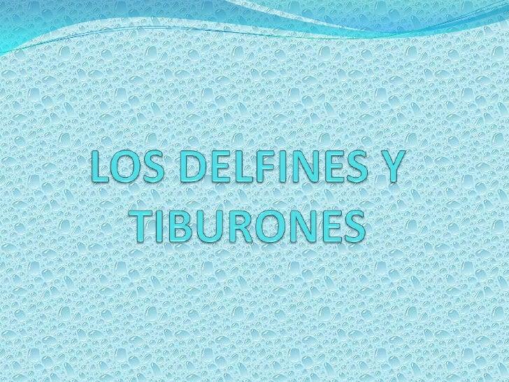 LOS DELFINES Y TIBURONES<br />