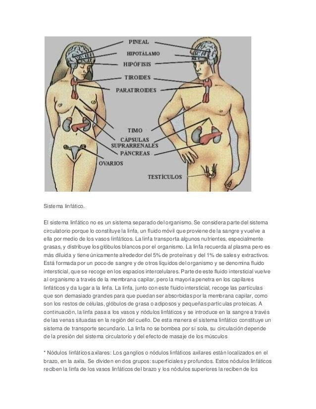 Lujo Linfáticos Axilares Nodo Anatomía Motivo - Imágenes de Anatomía ...