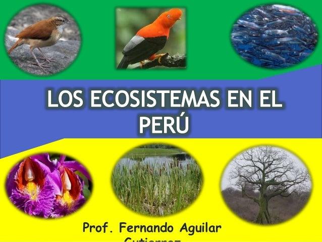 Prof. Fernando Aguilar