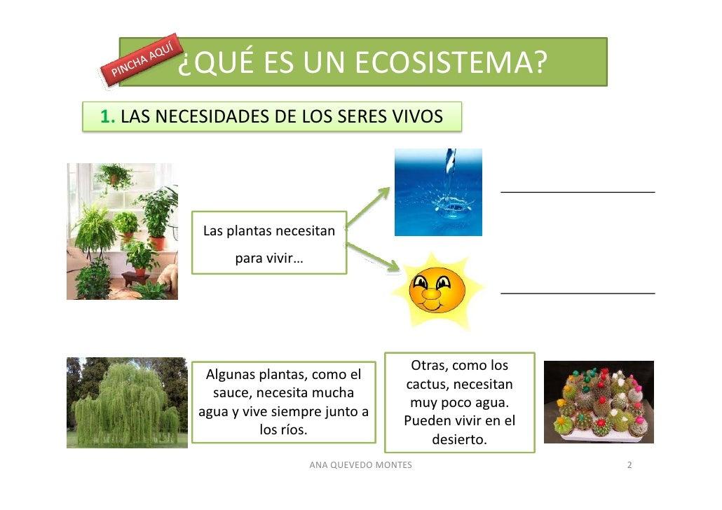 Los ecosistemas for Que es un vivero de plantas
