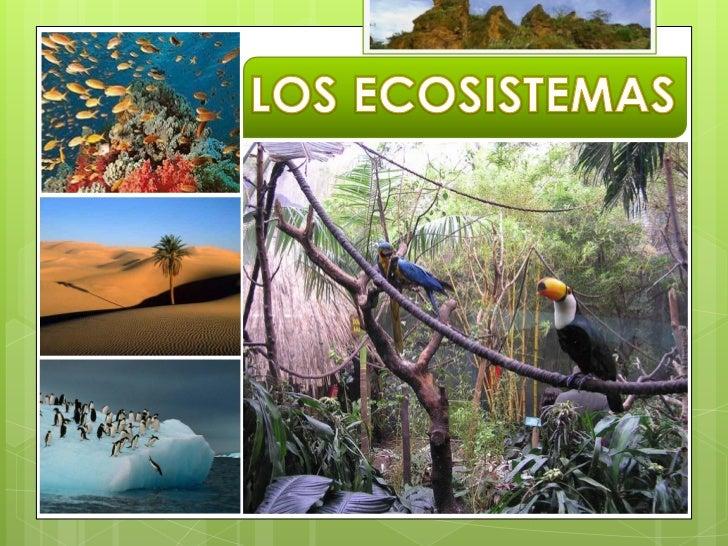Qué es un ecosistemaLas relaciones de los ecosistemasLa conservación de los ecosistemasEl mundo que queremos