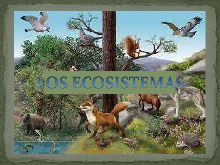  Un ecosistema es el  conjunto formado por1. los seres vivos de un    lugar,2. el medio físico en el que    habitan y3. l...