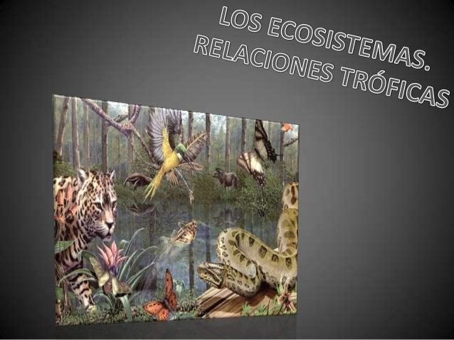 • La biosfera es una delgada franja de la Tierra, de apenas 20 km de espesor, donde se desarrolla la vida. Se extiende des...