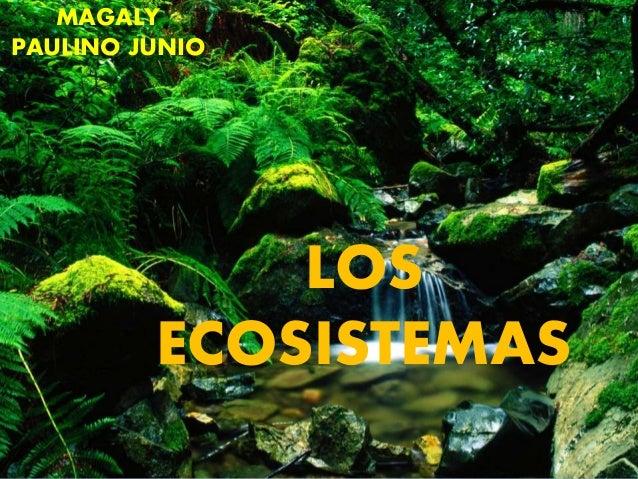 LOS ECOSISTEMAS MAGALY PAULINO JUNIO