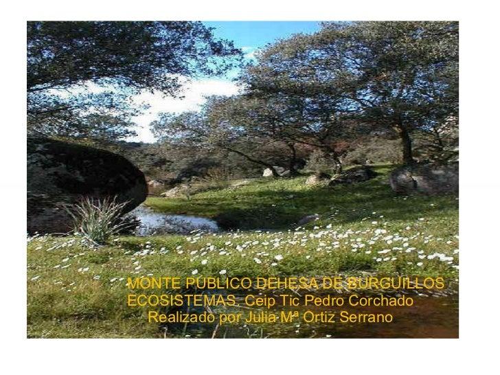 MONTE PÚBLICO DEHESA DE BURGUILLOS ECOSISTEMAS. Ceip Tic Pedro Corchado Realizado por Julia Mª Ortiz Serrano