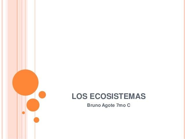 LOS ECOSISTEMAS Bruno Agote 7mo C