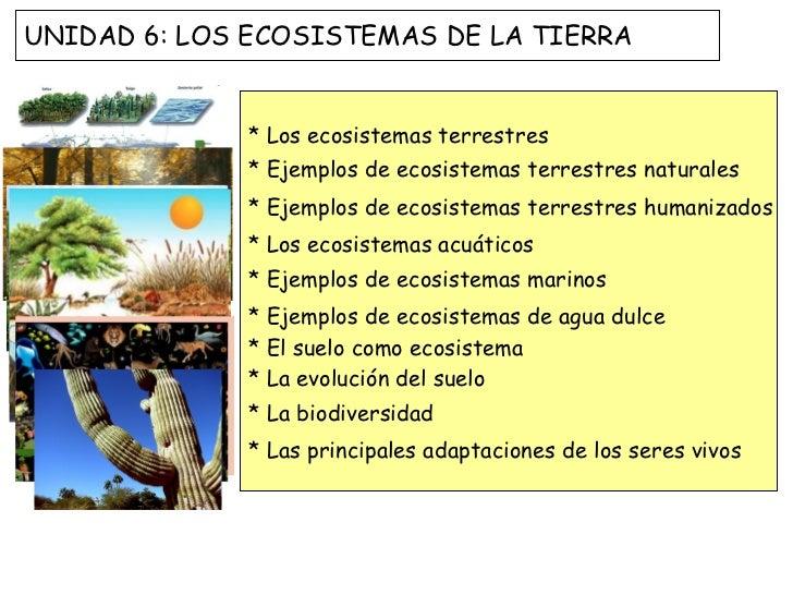 * Los ecosistemas terrestres * Ejemplos de ecosistemas terrestres naturales * Ejemplos de ecosistemas terrestres humanizad...