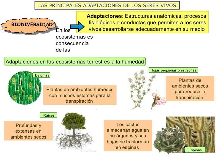 Los ecosistemas de la tierra 2012 for Medio en el que habitan los arboles
