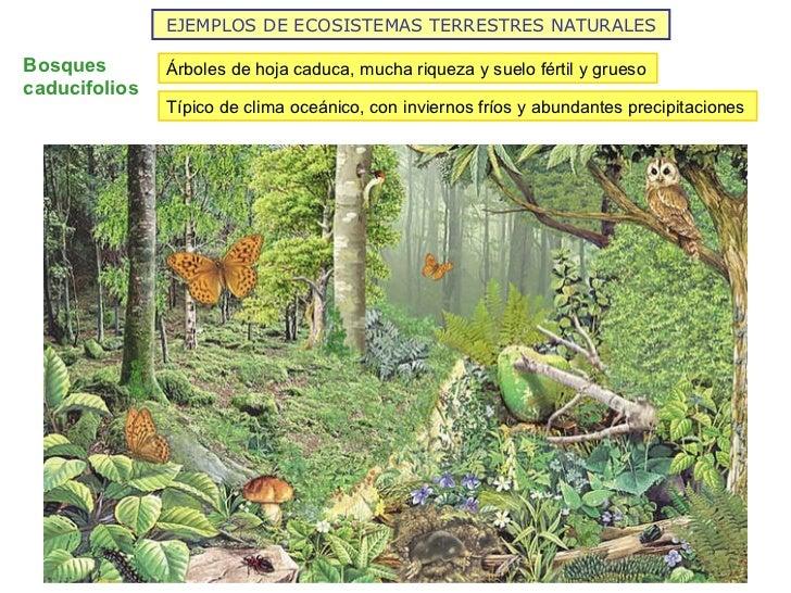 Los ecosistemas de la tierra 2012 for Diferencia entre arboles de hoja caduca y hoja perenne