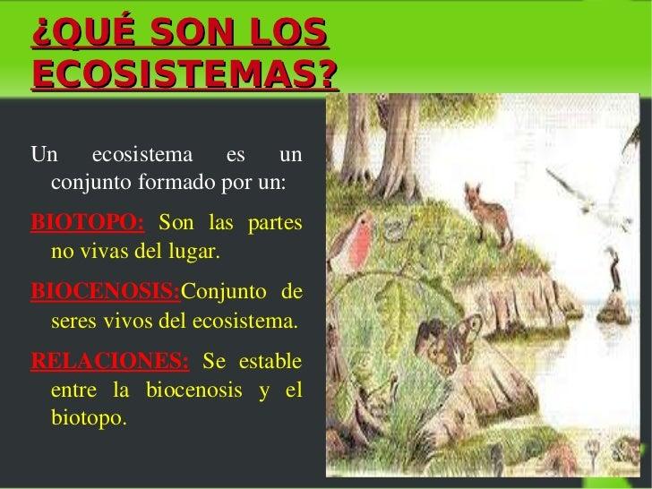 Los ecosistemas laura o for Cuales son los arboles perennes
