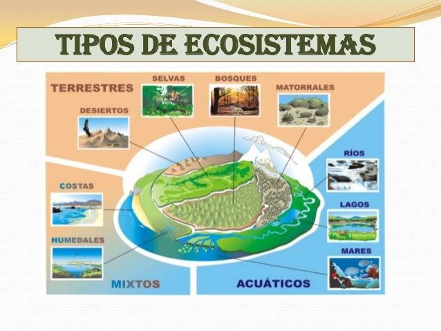 Los ecosistemas t 4 for Tipos de mobiliario urbano pdf