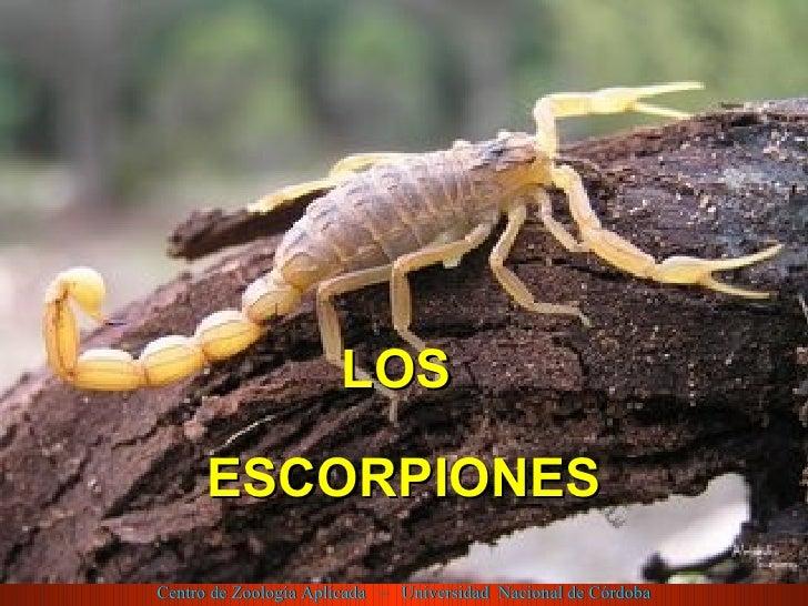 <ul><li>LOS  </li></ul><ul><li>ESCORPIONES </li></ul>