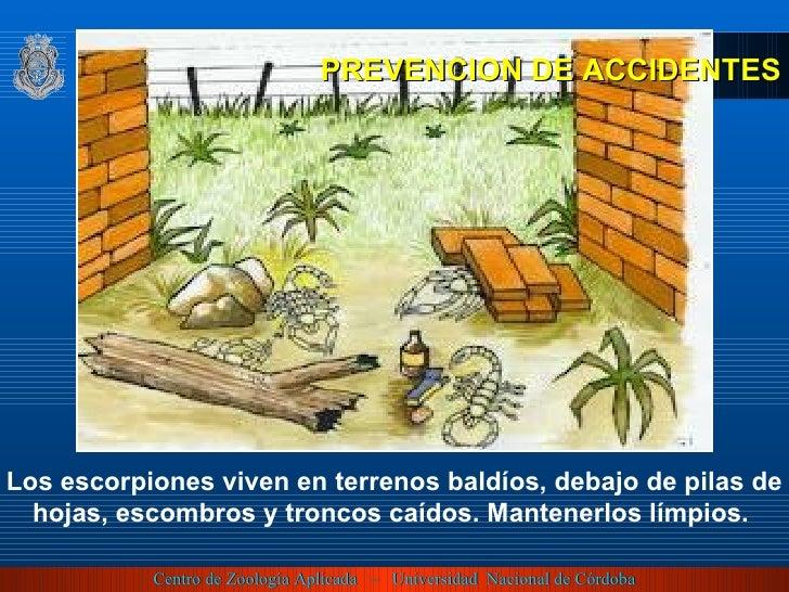 Los escorpiones viven en terrenos baldíos, debajo de pilas de hojas, escombros y troncos caídos. Mantenerlos límpios.  PRE...