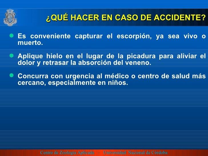<ul><li>¿QUÉ HACER EN CASO DE ACCIDENTE? </li></ul><ul><li>Es conveniente capturar el escorpión, ya sea vivo o muerto. </l...