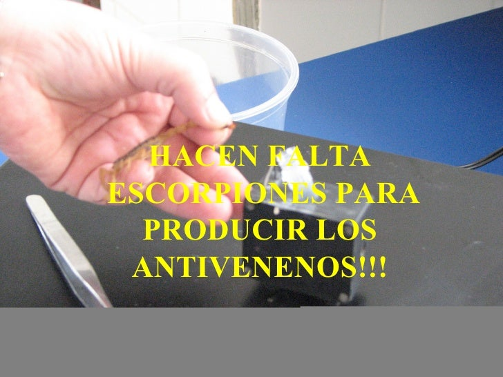 HACEN FALTA ESCORPIONES PARA PRODUCIR LOS ANTIVENENOS!!!