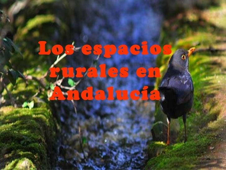 Los espacios rurales en Andalucía