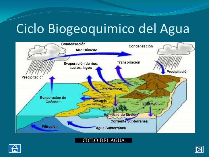 Los factores bióticos y abióticos y su influencia 1