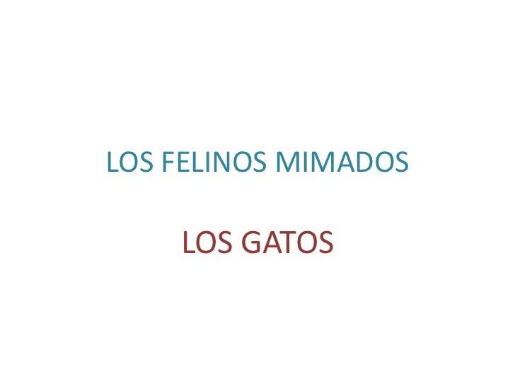 LOS FELINOS MIMADOS    LOS GATOS