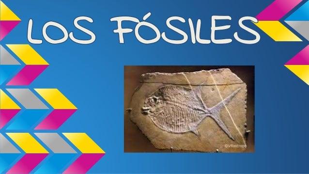 ¿Qué son Los Fósiles? Un Fósil es una impresión, réplica, material original o rastro de cualquier animal o planta que esté...