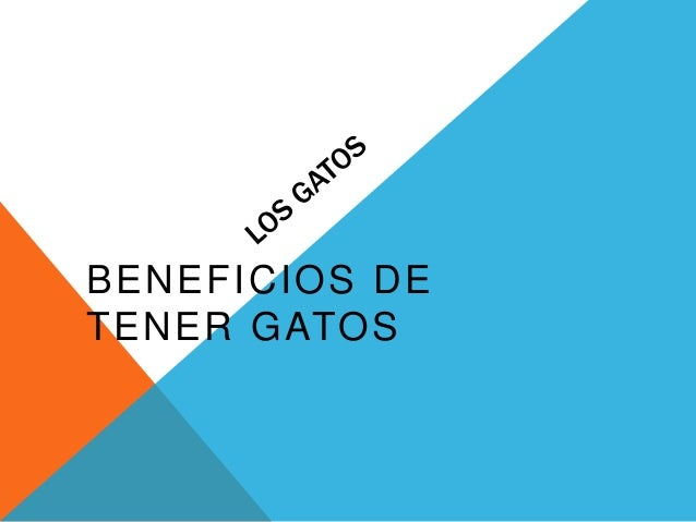 BENEFICIOS DE TENER GATOS