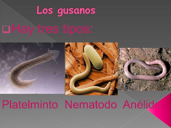 Las semillas de calabazas de las lombrices para embarazado