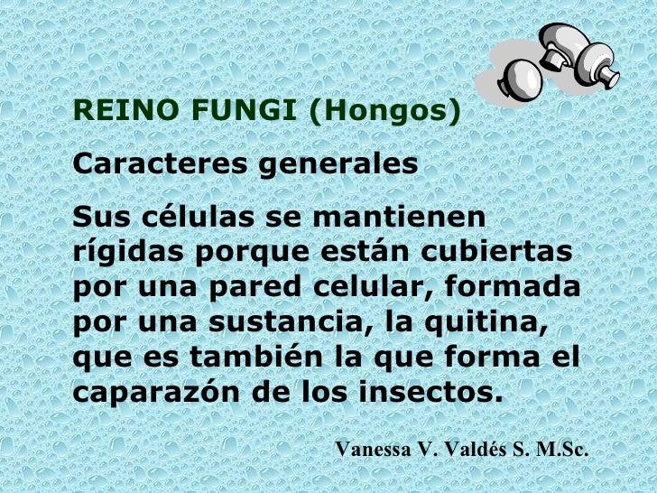 REINO FUNGI ( Hongos ) Caracteres generales S us células se mantienen rígidas porque están cubiertas por una pared celular...