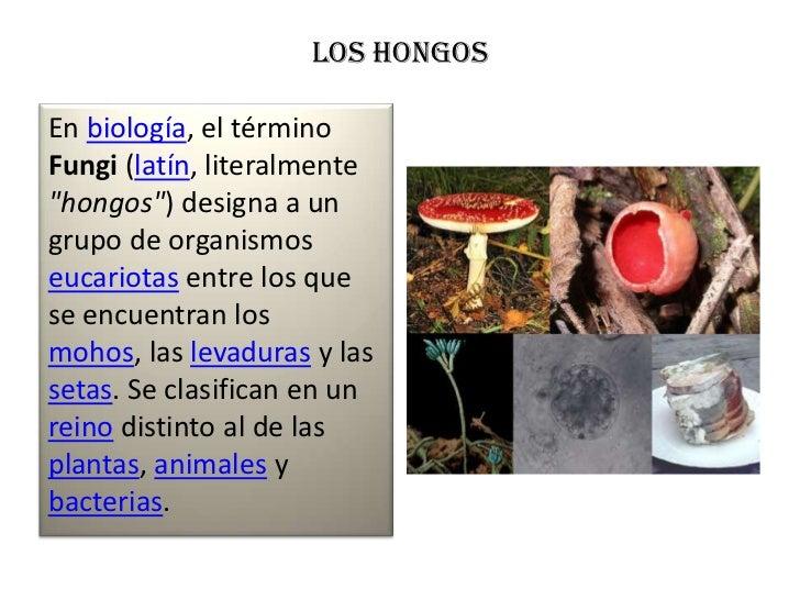"""LOS HONGOSEn biología, el términoFungi (latín, literalmente""""hongos"""") designa a ungrupo de organismoseucariotas entre los q..."""