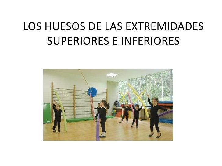 LOS HUESOS DE LAS EXTREMIDADES    SUPERIORES E INFERIORES