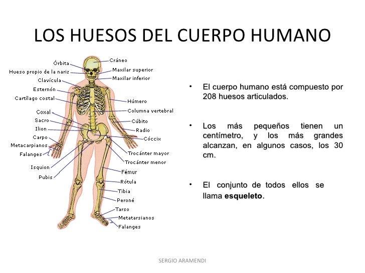 los-huesos-del-cuerpo-humano-1-728.jpg?cb=1320151348