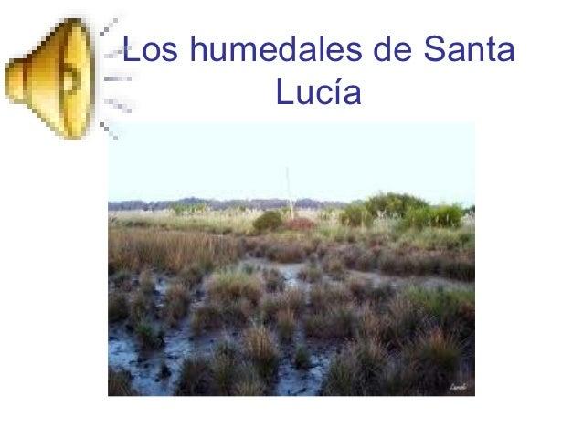 Los humedales de Santa        Lucía