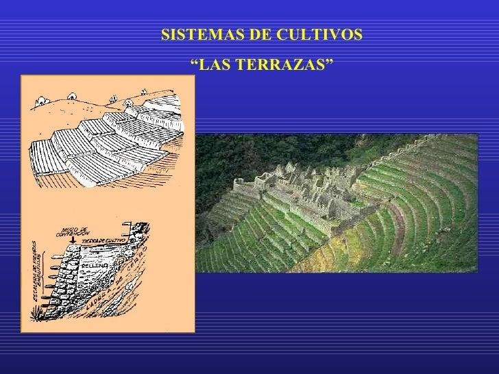 Terrazas Sistema De Cultivo