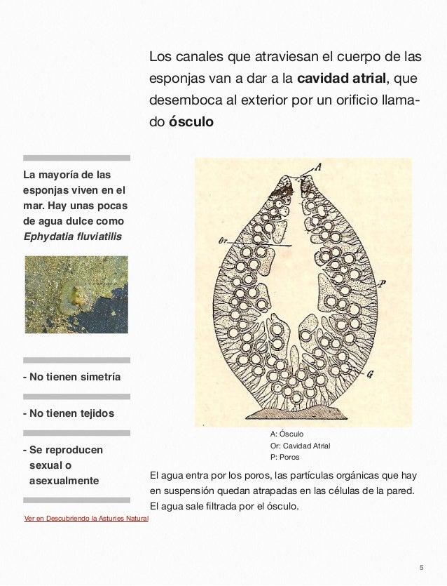 Encantador Anatomía Microscópica De Los Invertebrados Colección ...
