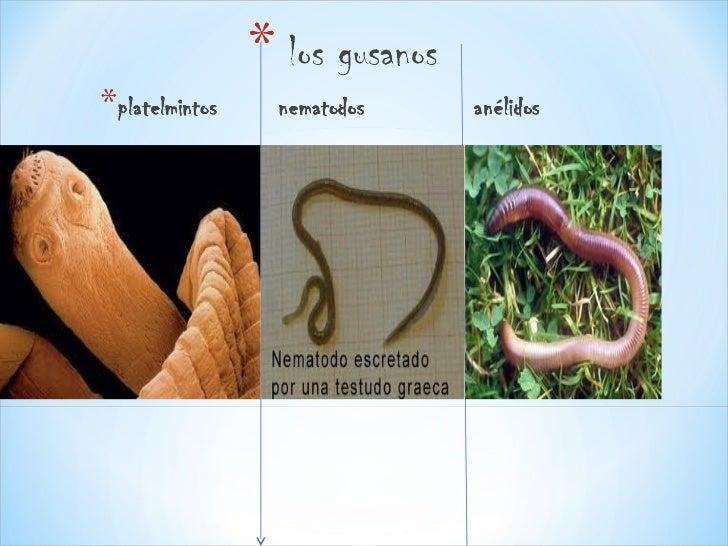Los invertebrados.teresa 1ºb Slide 3