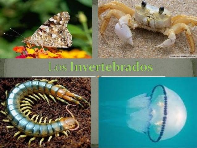 No tienen vertebras ni esqueleto interno Algunos tienen una protección alrededor del cuerpo Son ovíparos