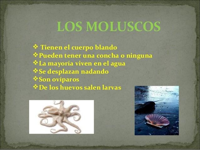 LOS EQUINODERMOS Tienen un esqueleto formado por placas duras Algunos tienen púas La estrella y los erizos de mar son m...