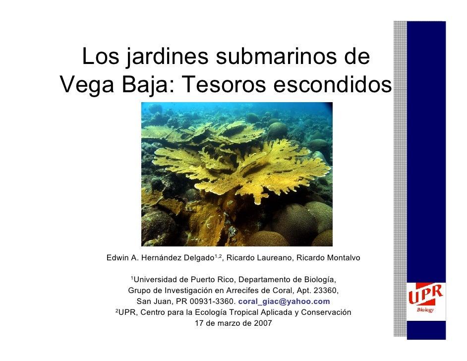 Los jardines submarinos de Vega Baja: Tesoros escondidos         Edwin A. Hernández Delgado1,2, Ricardo Laureano, Ricardo ...