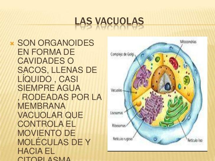 Un curso corto en metabolismo cuerpos cetonicos