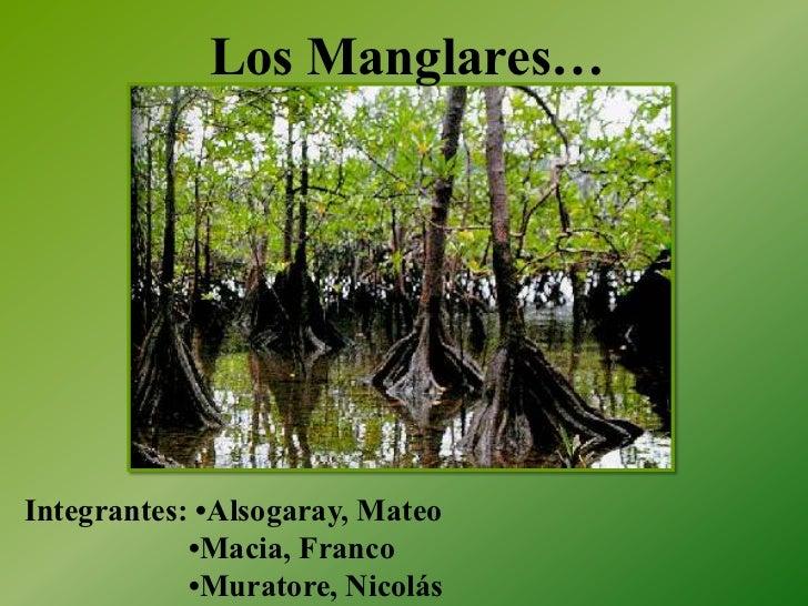 Los Manglares…Integrantes: •Alsogaray, Mateo            •Macia, Franco            •Muratore, Nicolás