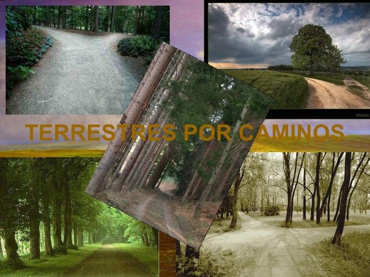 TERRESTRES POR CAMINOS