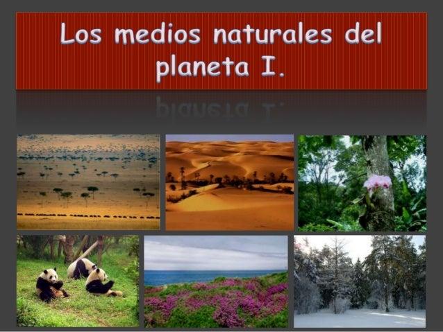 • Selva ecuatorial  • Bosque tropical húmedo  • Bosque tropical con estación seca.  • Desierto  Climas  cálidos  • Taiga o...